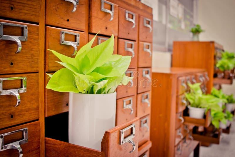 Árvore em caixas de madeira do armário Open no arquivo r da biblioteca ou do arquivamento foto de stock royalty free