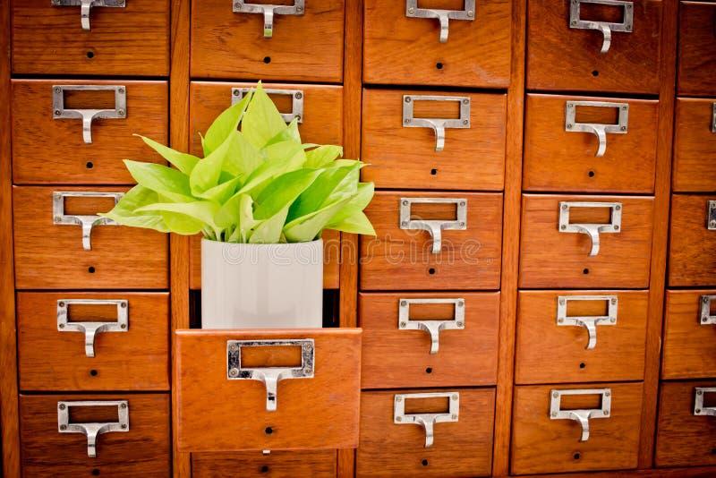 Árvore em caixas de madeira do armário Open no arquivo r da biblioteca ou do arquivamento imagens de stock
