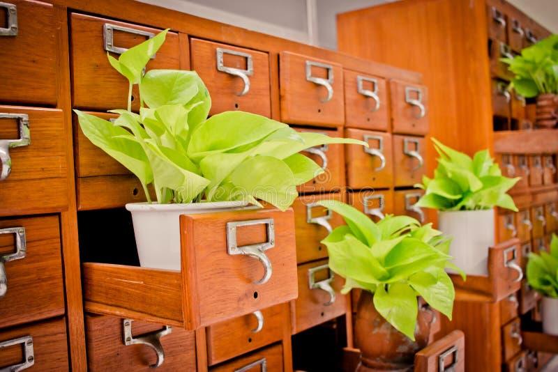 Árvore em caixas de madeira do armário Open no arquivo r da biblioteca ou do arquivamento fotos de stock