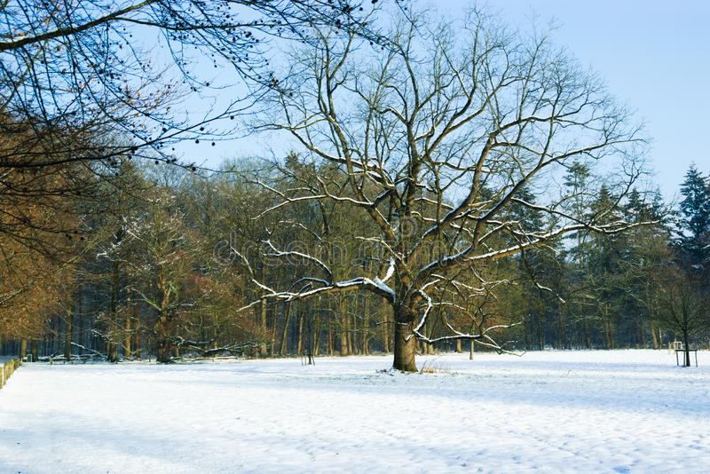 Árvore em campos nevados foto de stock royalty free