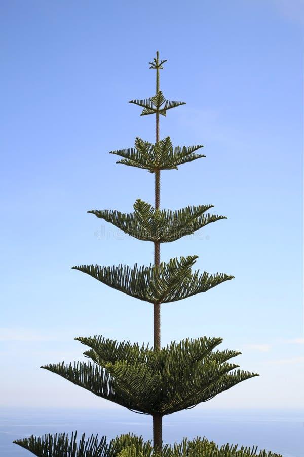 Árvore em Cantão de Beausoleil france imagens de stock royalty free