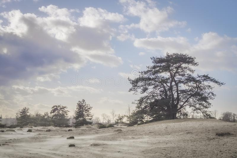 Árvore em dunas em um dia ensolarado azul foto de stock royalty free