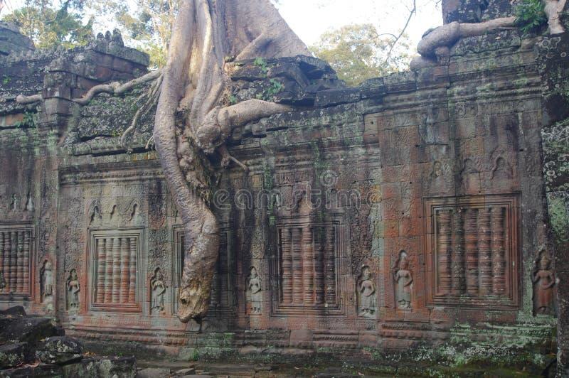 Árvore em Preah Khan fotos de stock