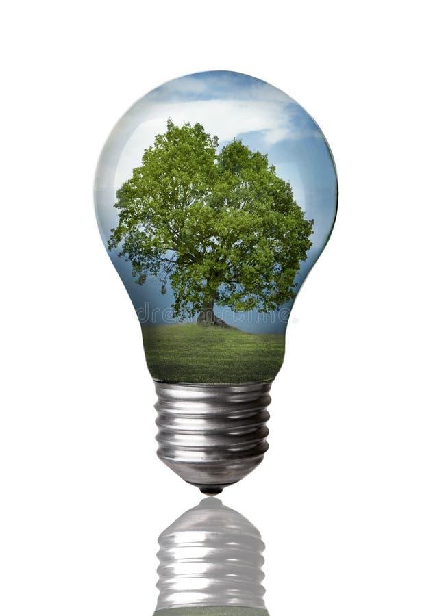 Árvore em um bulbo fotografia de stock royalty free