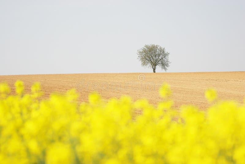 Árvore em um campo fotos de stock