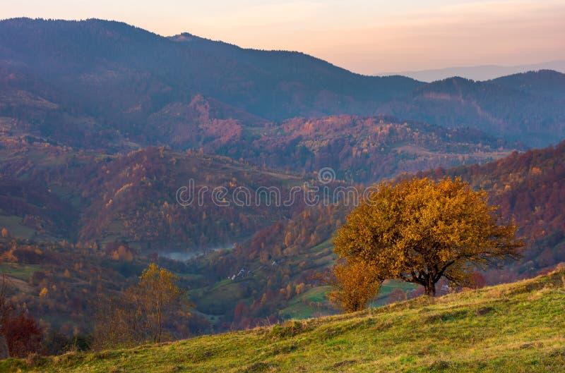 Árvore em um montanhês gramíneo em montanhas do outono foto de stock royalty free