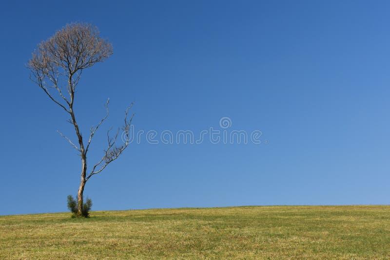 Árvore em um monte gramíneo imagem de stock royalty free