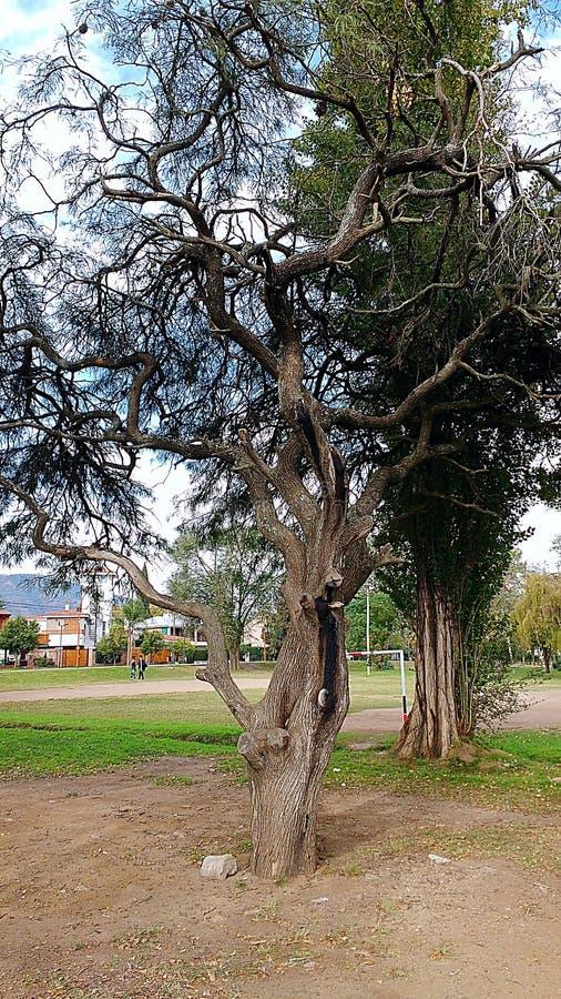 Árvore em um parque foto de stock royalty free