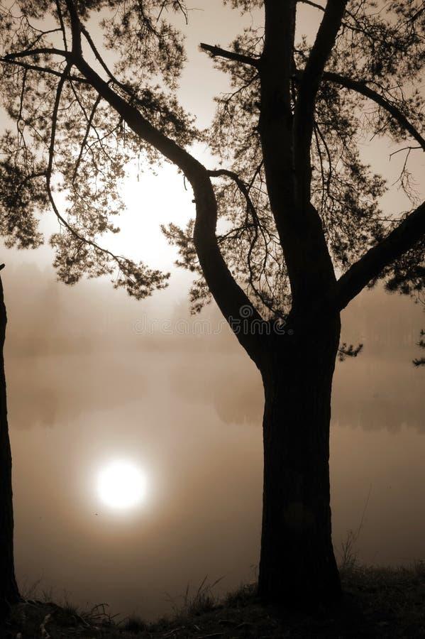 Árvore em uma costa do lago na névoa imagens de stock