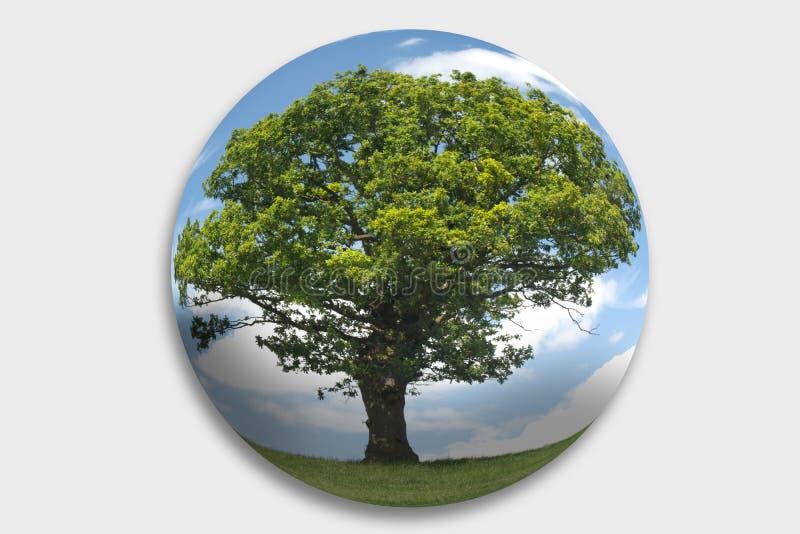 Árvore em uma esfera imagens de stock