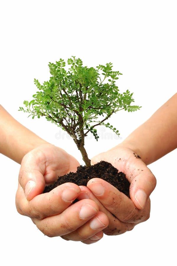 Download Árvore em uma mão imagem de stock. Imagem de mão, pequeno - 16859493