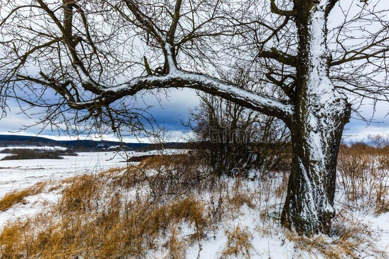 Árvore em uma paisagem coberta na neve imagens de stock