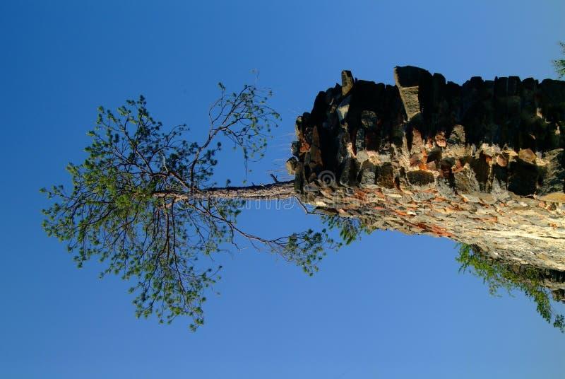 Árvore em uma parede fotografia de stock
