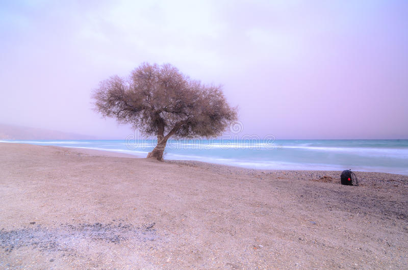 árvore em uma praia no por do sol fotos de stock