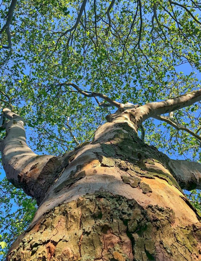 Árvore em wormsperspective no verão imagem de stock royalty free
