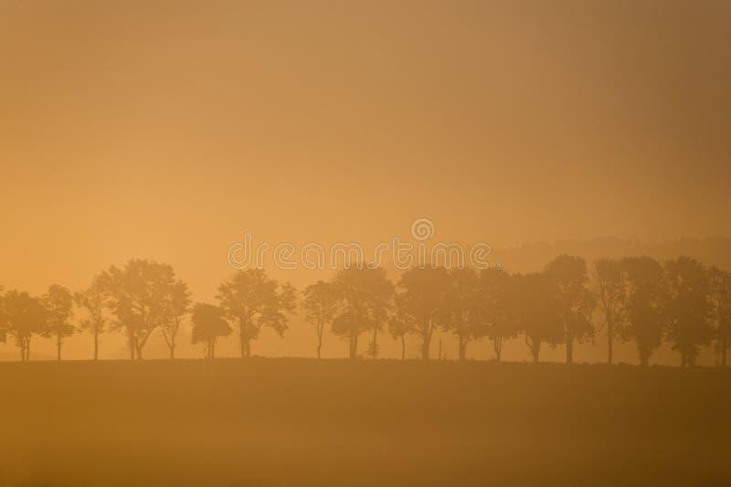 Árvore enevoada da manhã fotos de stock