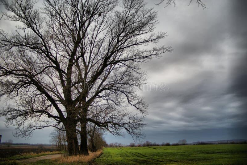 Árvore enorme imagens de stock royalty free
