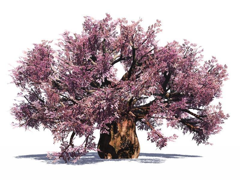 Árvore enorme do baobab isolada imagem de stock royalty free