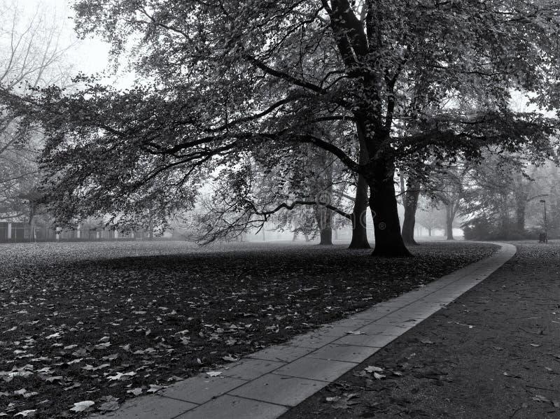 Árvore enorme em um parque no outono com o caminho de pedra que conduz afastado na distância monocromática fotografia de stock