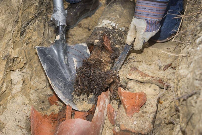 A árvore enraíza a linha velha completamente de enchimento da tubulação de esgoto da terracota foto de stock