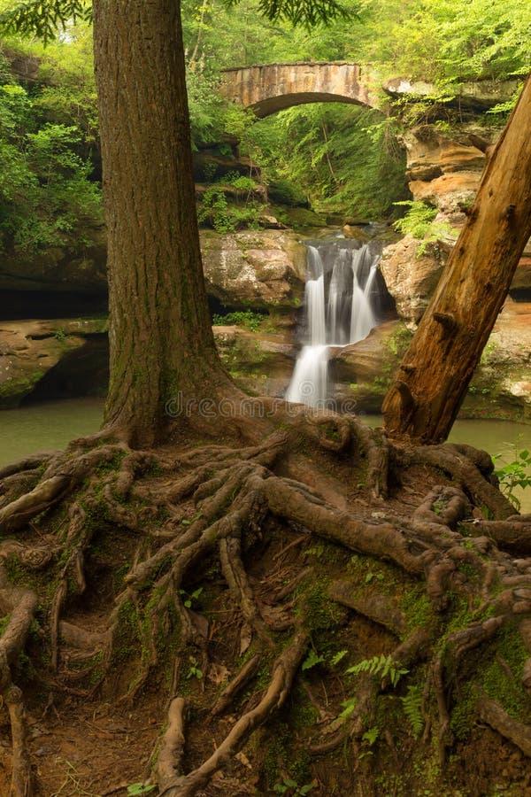 A árvore enraíza na frente das quedas superiores na caverna do ancião, montes parque estadual de Hocking, Ohio foto de stock royalty free