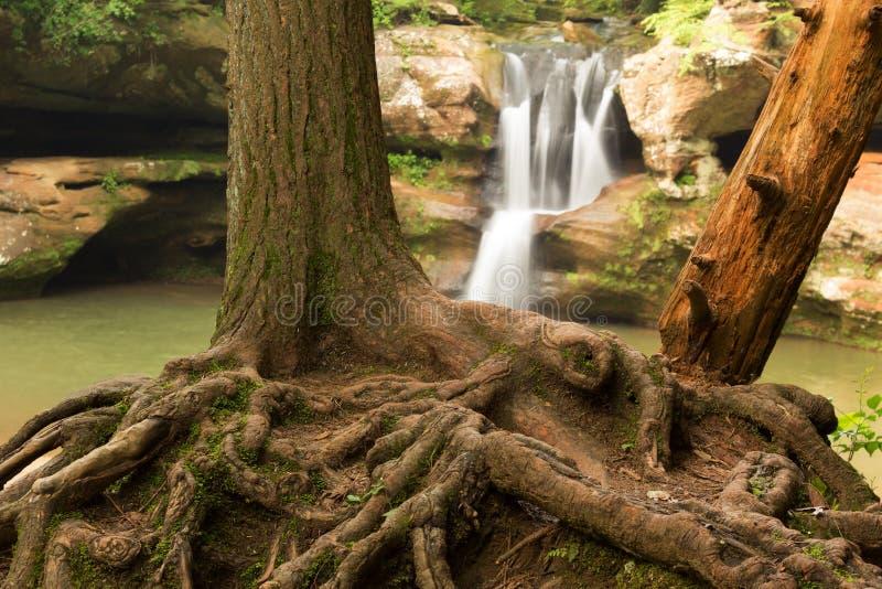 A árvore enraíza na frente das quedas superiores na caverna do ancião, montes parque estadual de Hocking, Ohio foto de stock