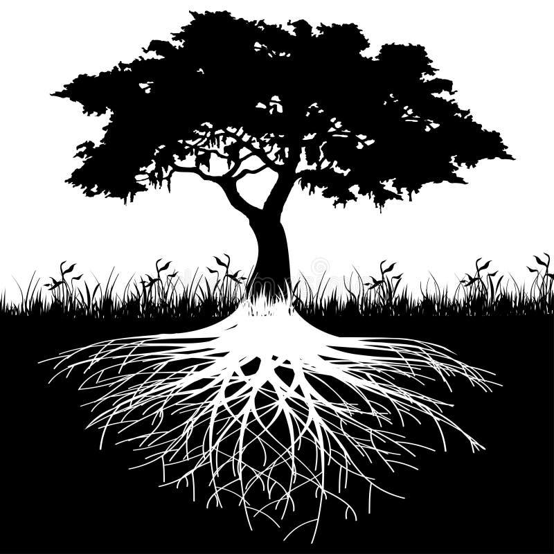 A árvore enraíza a silhueta ilustração royalty free