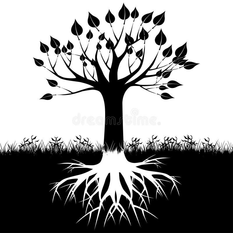 A árvore enraíza a silhueta ilustração do vetor