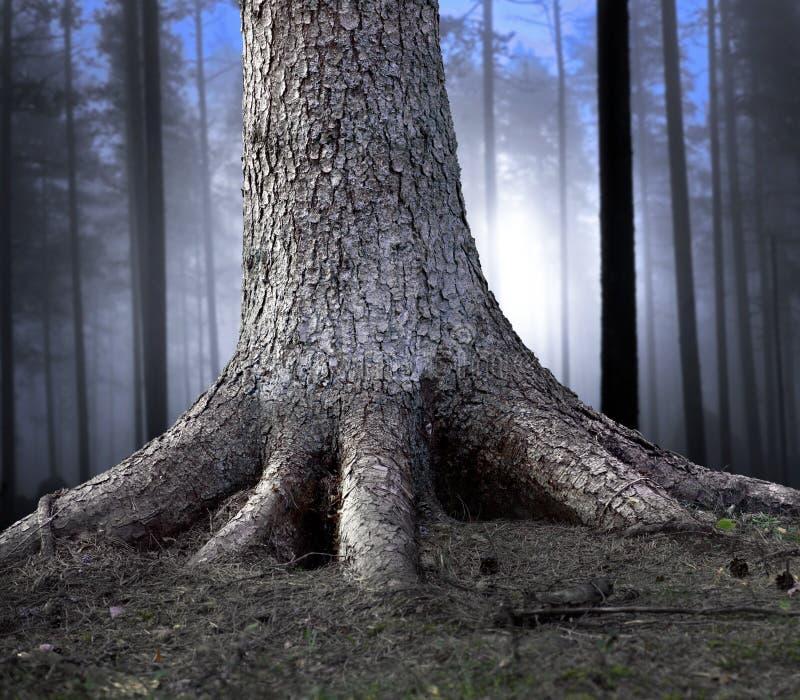 Download Árvore enraizada foto de stock. Imagem de coniferous - 26517796