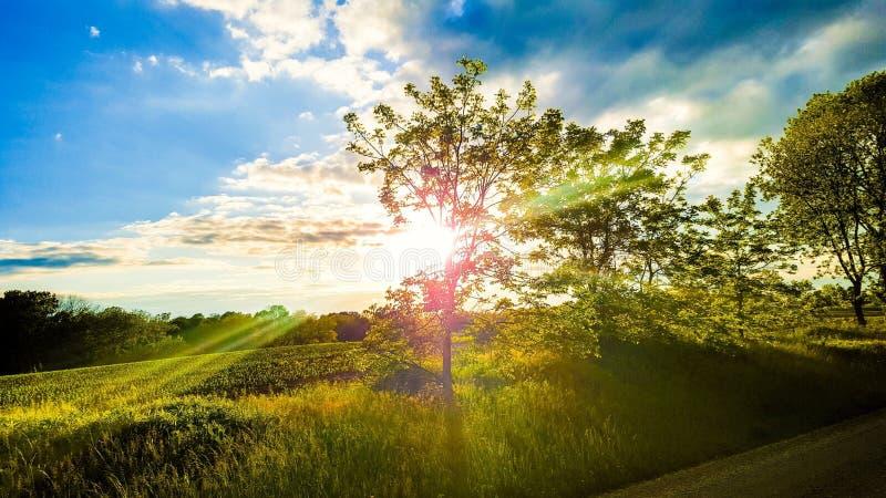 Árvore ensolarada foto de stock royalty free