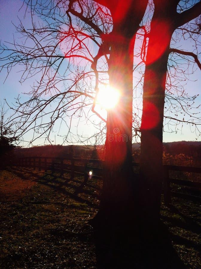 Árvore ensolarado fotos de stock royalty free