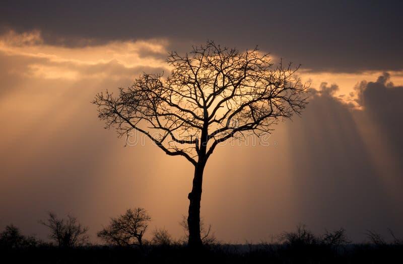 Árvore espiritual imagens de stock