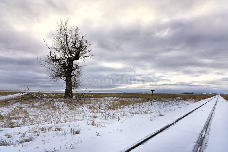 Árvore estéril no campo nevado fotos de stock royalty free