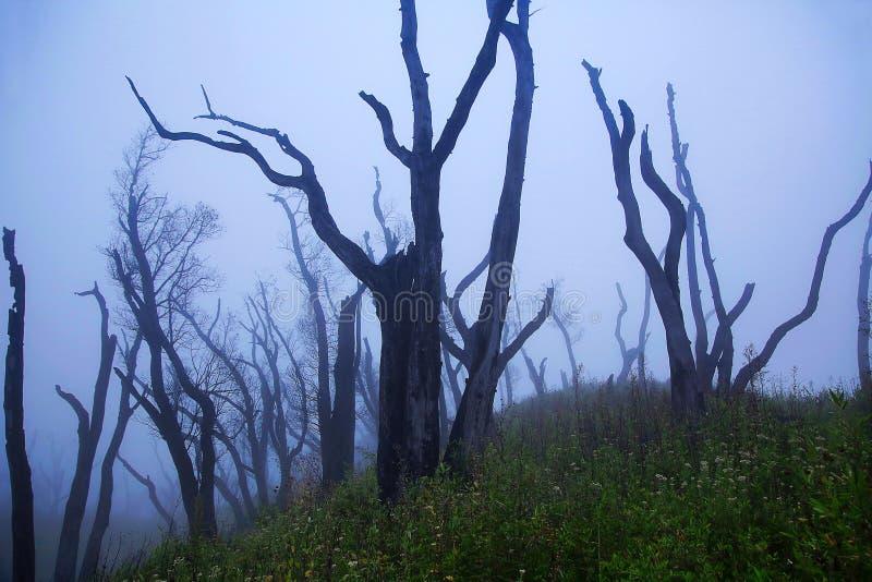 Árvore estéril no vale de Dzukou da névoa Beira dos estados de Nagaland e de Manipur, Índia fotografia de stock