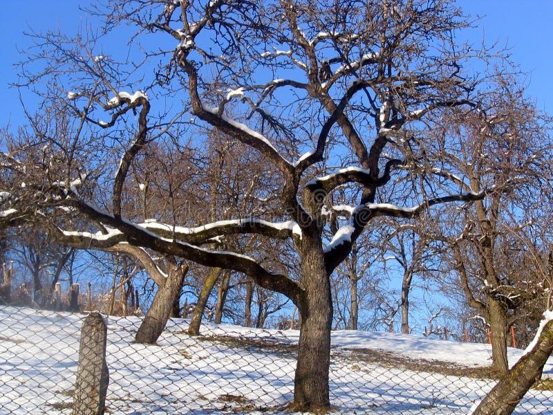 Árvore estranha foto de stock