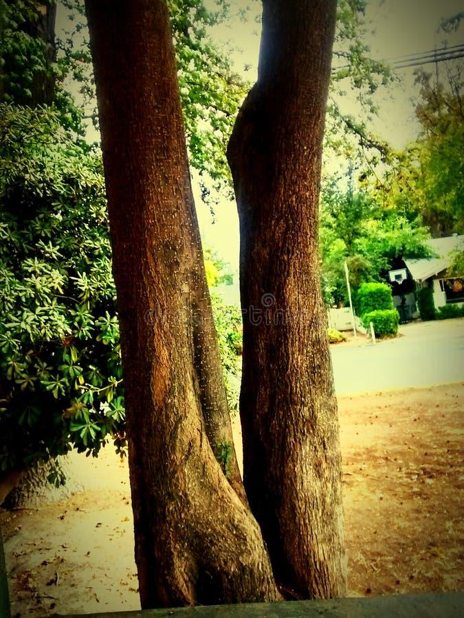 Árvore estranha foto de stock royalty free