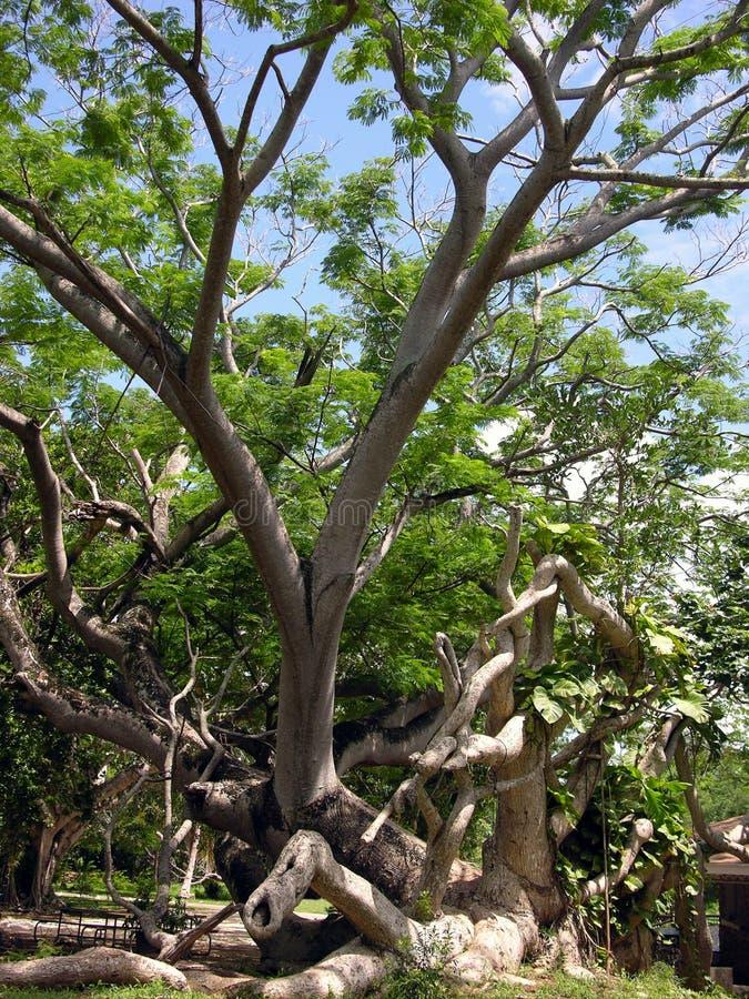 A árvore exótica imagem de stock