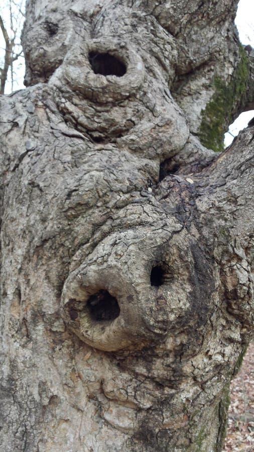 Árvore feia fotos de stock royalty free