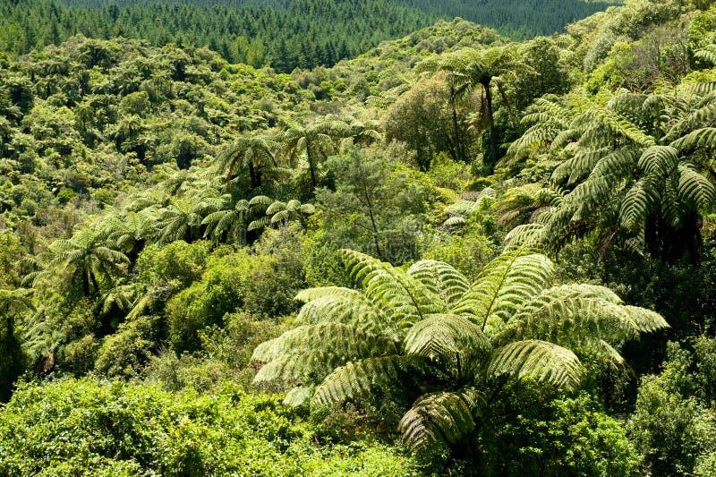 Árvore Fern Forest de NZ foto de stock royalty free