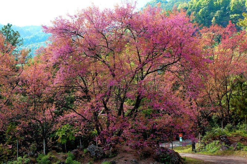 Árvore Flor Rosa Ao Lado Da Estrada Do Dia imagem de stock royalty free