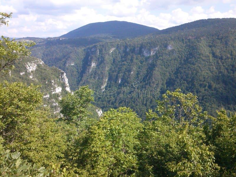 Árvore, floresta, garganta, montes, montanhas, vista imagens de stock royalty free