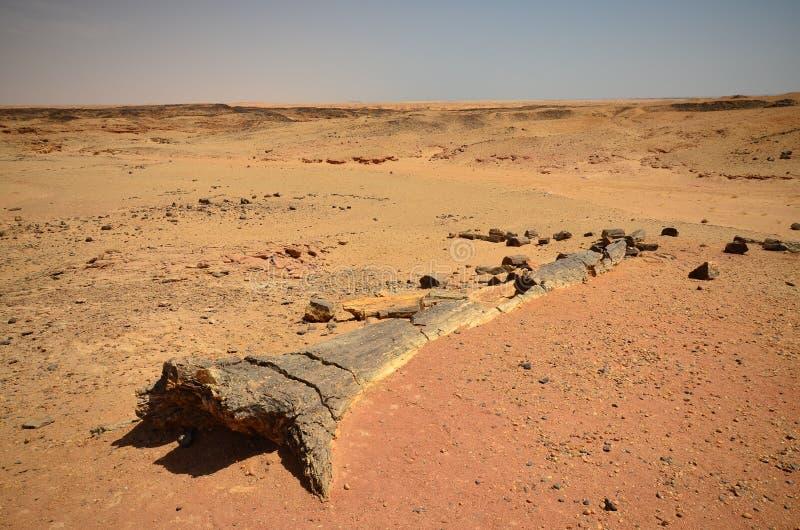 Árvore fossilizada no deserto africano fotografia de stock royalty free