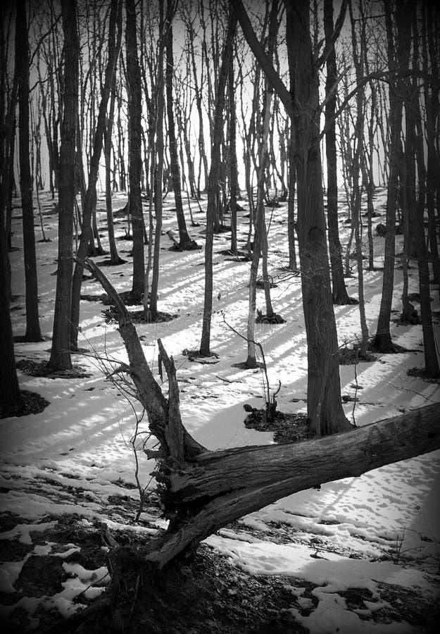 Árvore fraca fotografia de stock