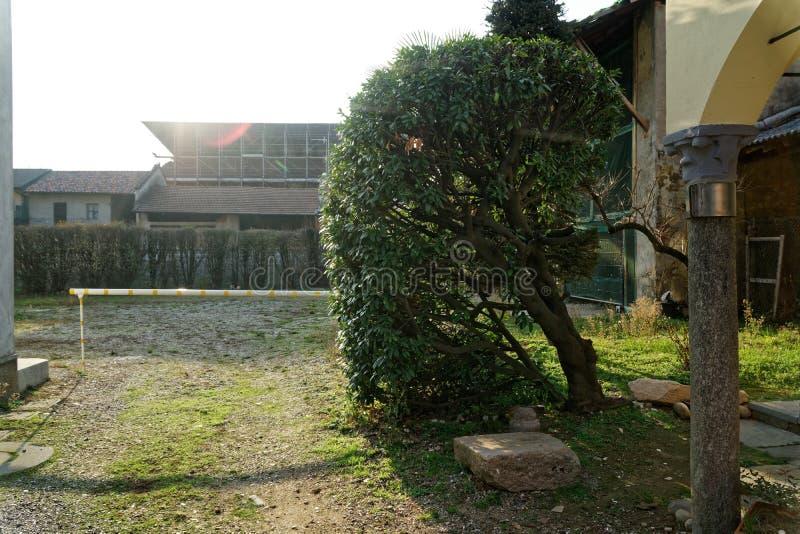 A árvore fresca do verde da mola gosta da parede da grama ou do fundo da cerca da erva fotografia de stock royalty free