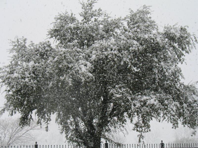Árvore fria foto de stock royalty free