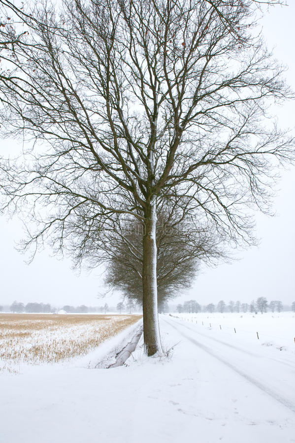 Árvore fria fotografia de stock royalty free