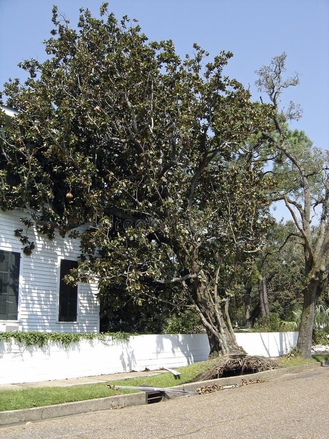 Árvore fundida tempestade que inclina-se na casa fotos de stock