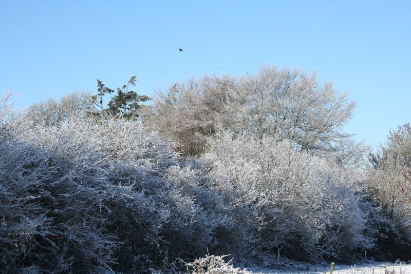 Árvore gelada fotografia de stock