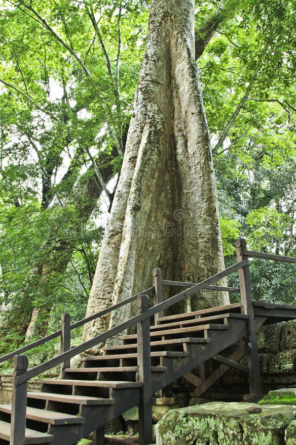 Árvore gigante imagens de stock royalty free