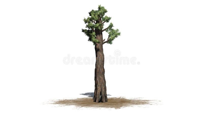 Árvore gigante do Redwood ilustração stock